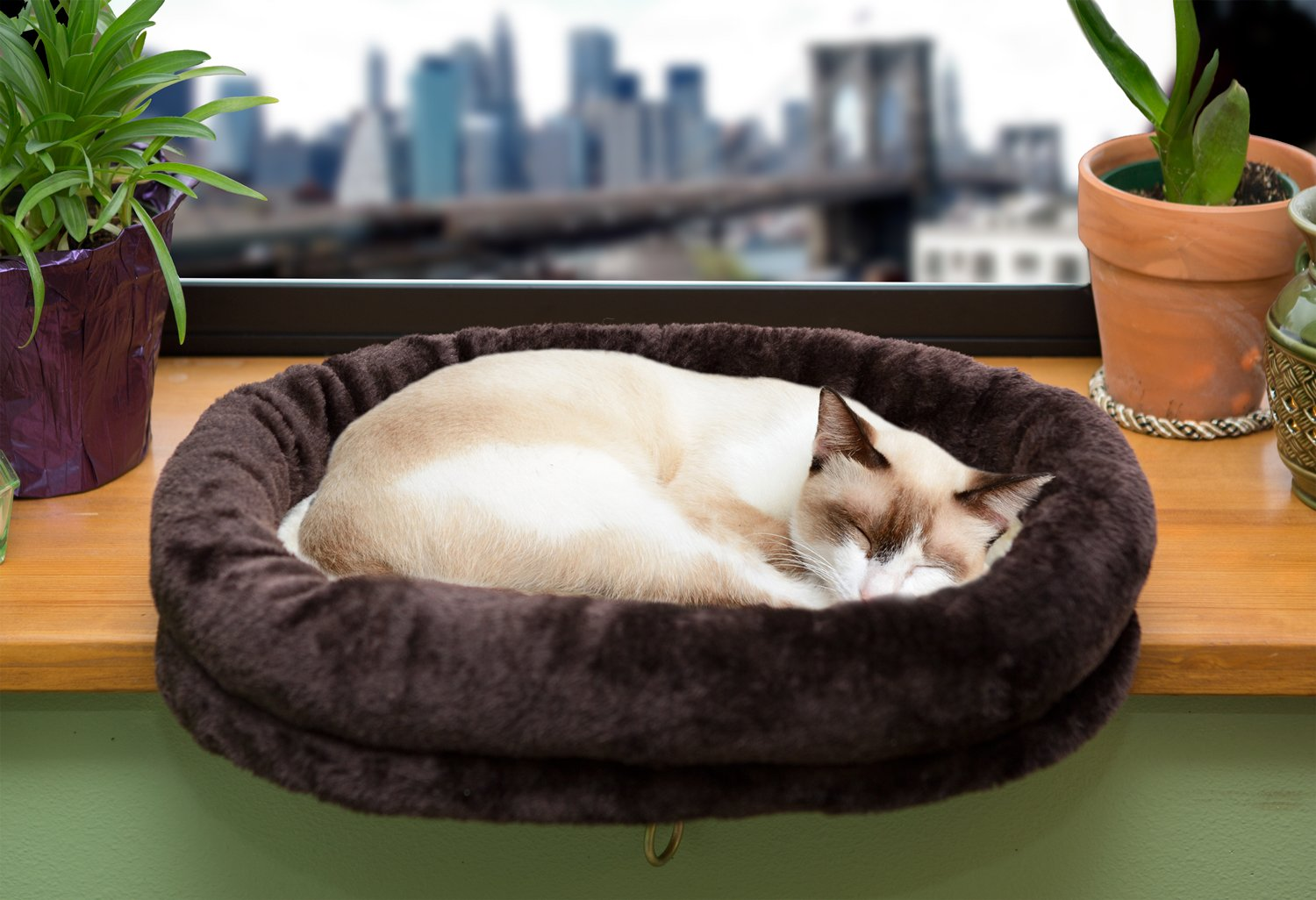 A Special Bed For Your Cat