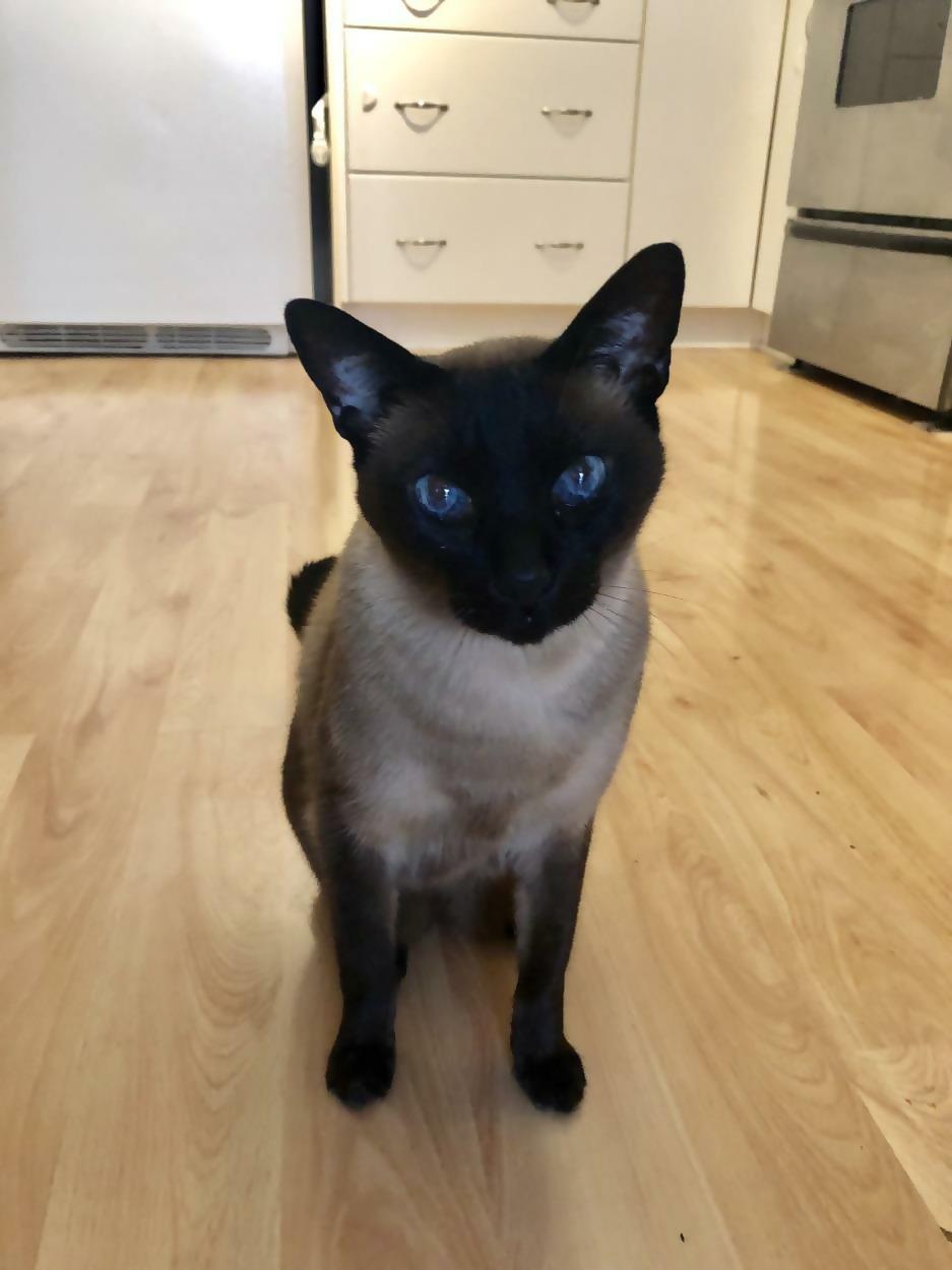 Cat-Friendly Flat Floor
