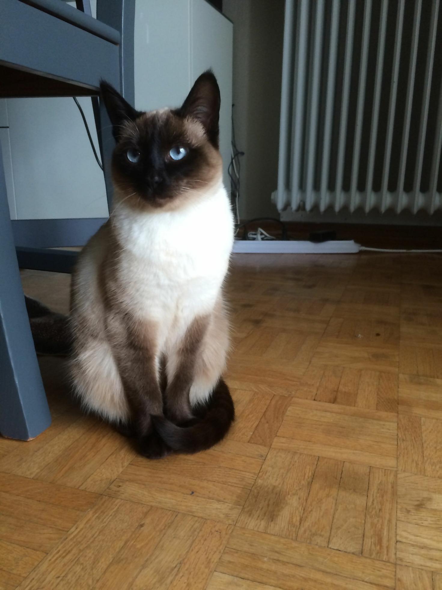 Cat-Friendly Flooring