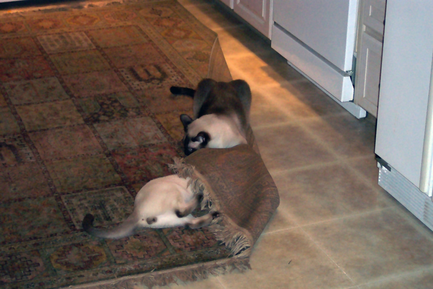Cat-Proof Area Rugs