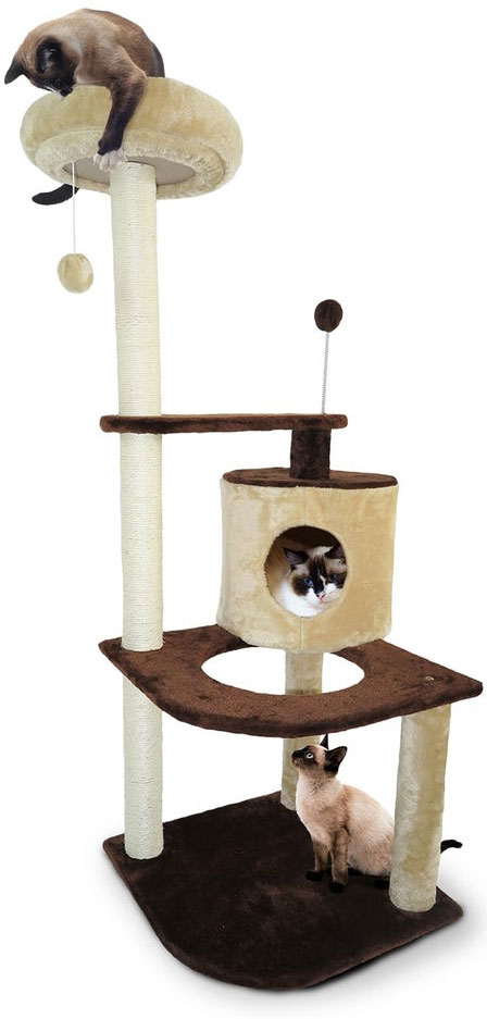 Scratching Post with Siamese cats
