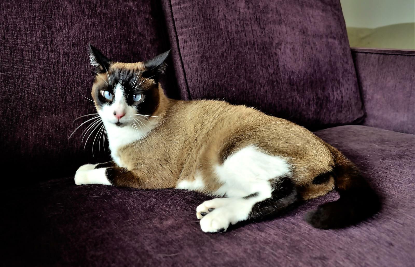 Siamese-friendly Furniture
